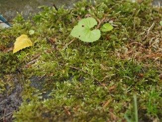 Unkraut und Moos im Garten