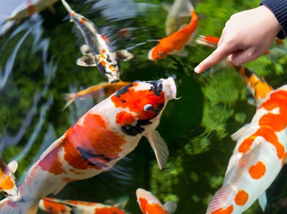 Gartenteich winterfest machen das gartenmagazin for Fische im gartenteich