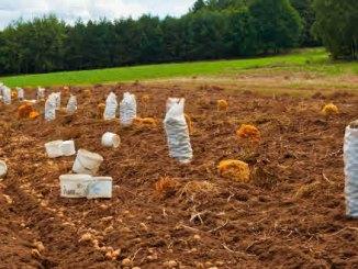Gemüse im Garten - Gemüsegarten anlegen & planen - Anfänger / Profis