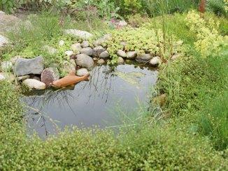 Gartenteich richtig reinigen