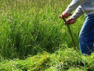 Ökologisch Rasen mähen
