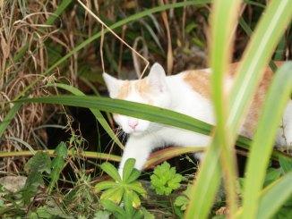 Katze im Garten im Beet