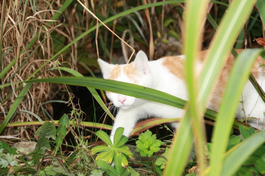 Schön Katze Im Garten Im Beet