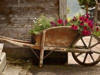 Alte Schubkarre bepflanzen