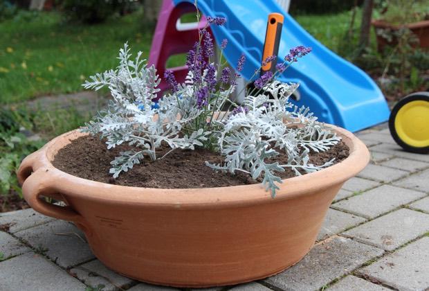Keramikschale mit Greiskraut und Lavendel