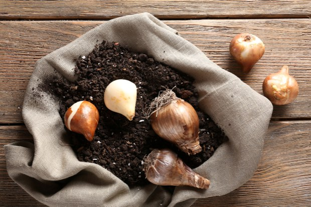 Tulpen Im Garten Pflanzen ? Das Gartenmagazin Tulpen Im Garten Pflanzen