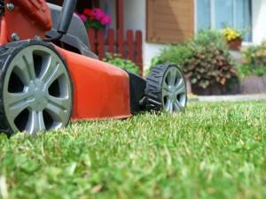 Rasenmähen im Winter