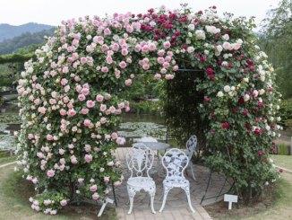 Rosenbogen Garten