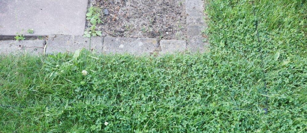 Begrenzungsdraht Rasen Mähroboter